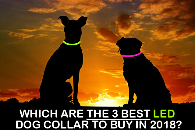 The 3 best LED dog collar to buy in 2018.